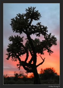Pretty sunset by the Cholla tree