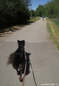 Walking Polly on the greenbelt right next to the RV park